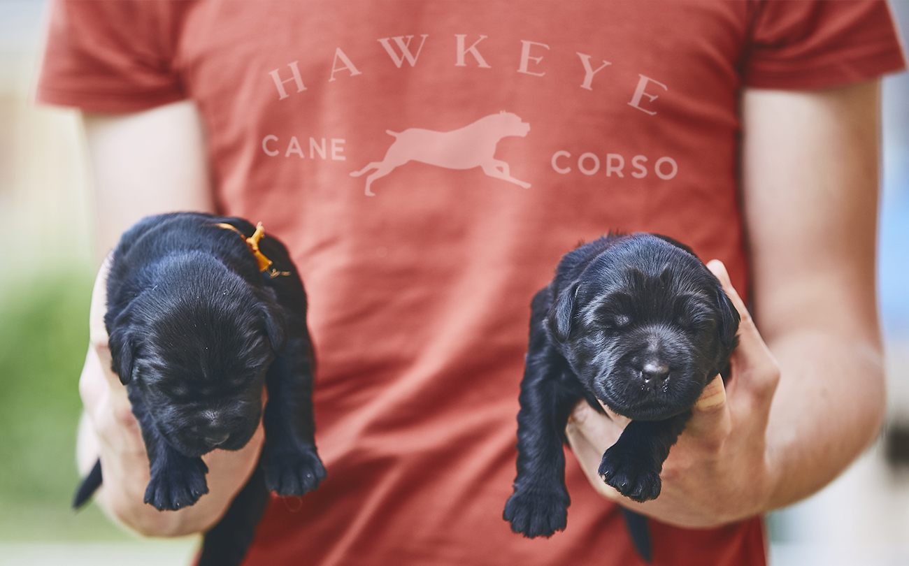 HawkeyePuppies